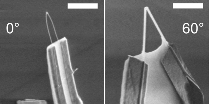 Bottom-up design of nanoFET probes