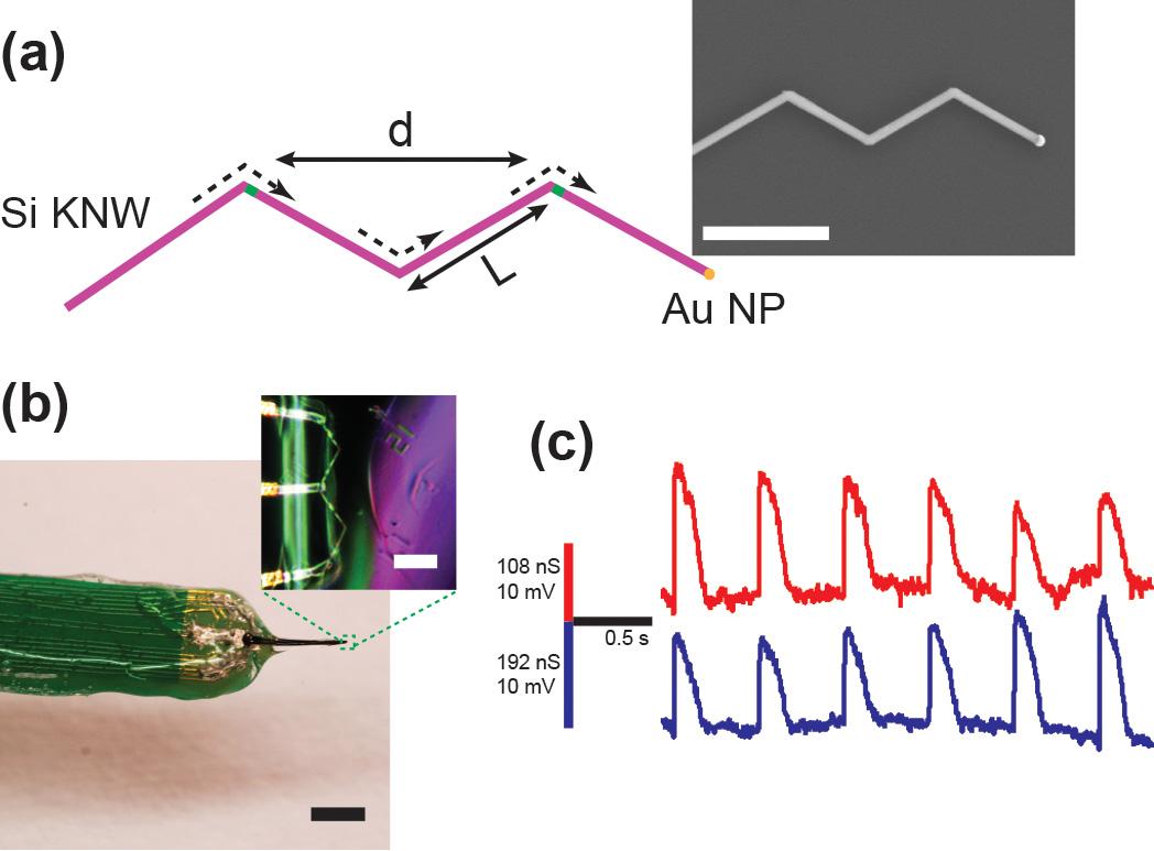 BMES 2014: Quan gave a talk on multiplexed nanoFET
